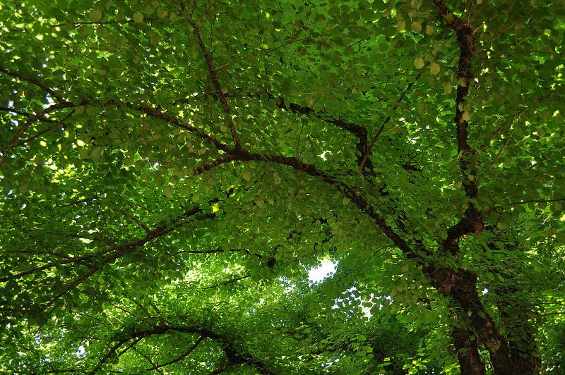 green screen 5-31-2012.jpg