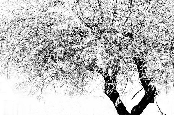Black and White Frost