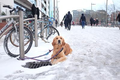 Dublin in the snow