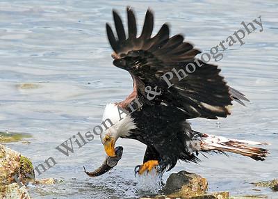Nature Takes Flight