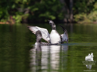 Trout Lake Loons 9-25-21