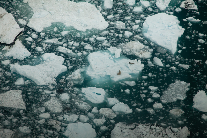 Alaska Icy Bay-3911.jpg