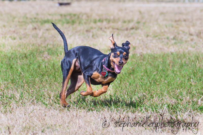 Woofstock_carrollwood_tampa_2018_stephaniellen_photography_MG_8352.jpg
