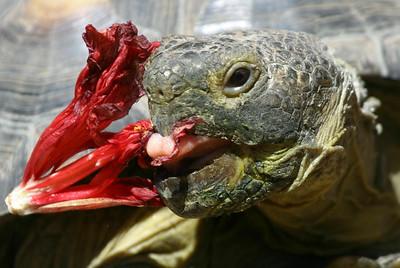 tortoise pen