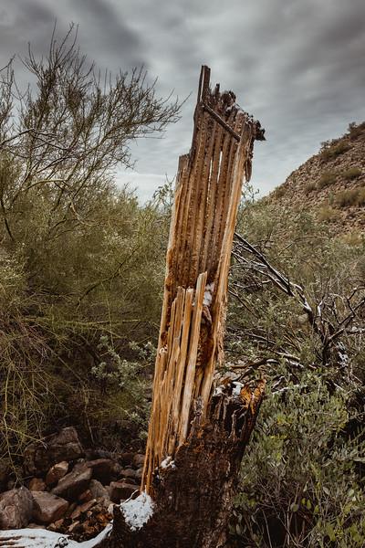 New Years Cactus-7620.jpg