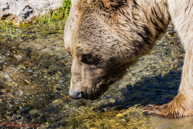 2016-09-07 Tierpark Goldau - 0U5A8818.jpg