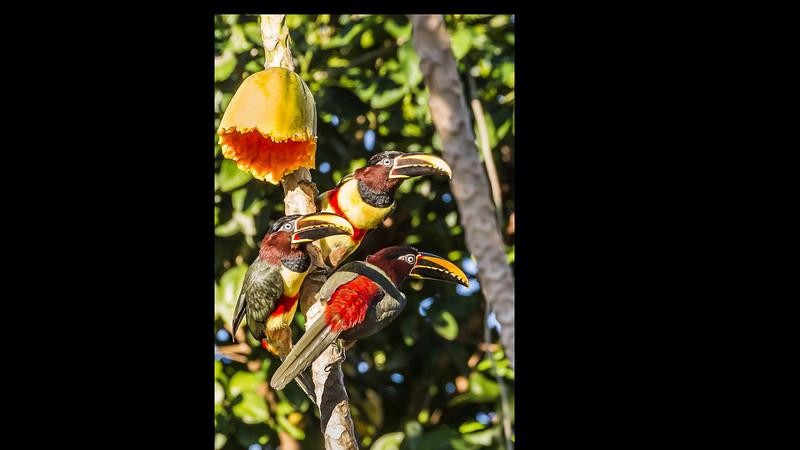 Pantanal Video