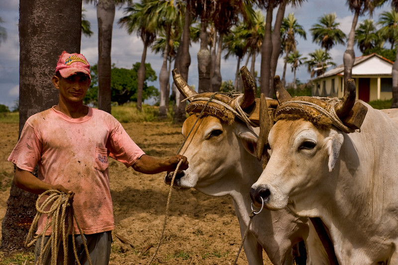 Cuban farmer with oxen 4034.jpg