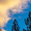 Three Pine Trees and Orange Sunset Clouds