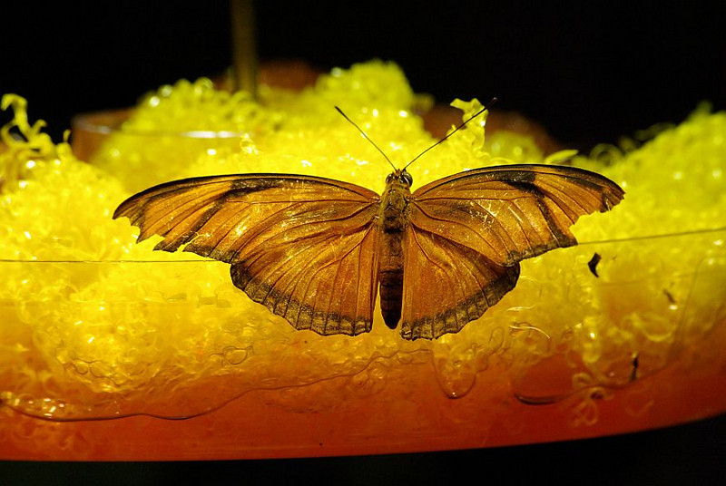 Butterfly_6.jpg