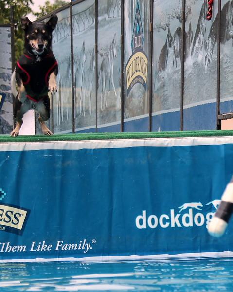 Dock Dogs at Fair-047.JPG