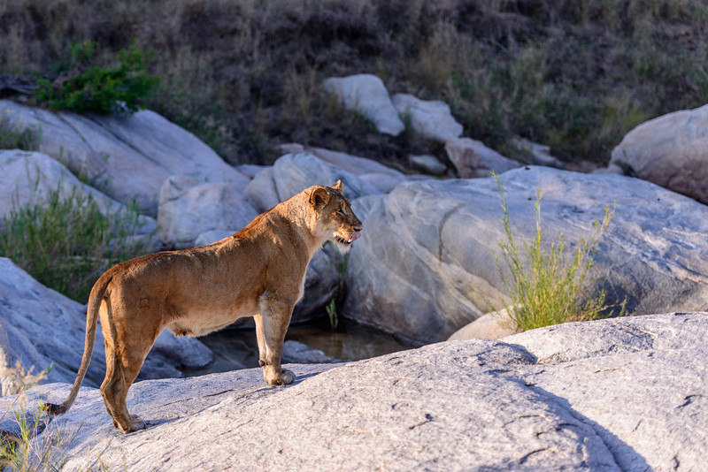 LeopardHills-20130827-2312.jpg