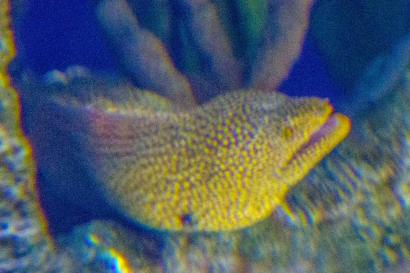 GA Aquarium with Linc, Ali & Abe-24.jpg
