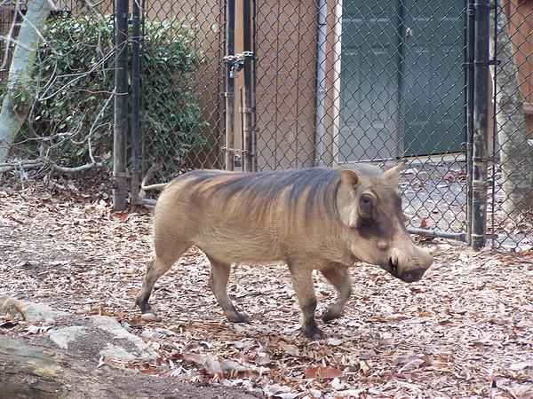 Montgomery Zoo 2006