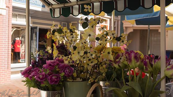 Disneyland Resort, Disneyland, Main Street USA, Flower