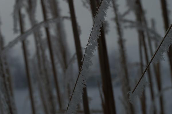 Winter Hoarfrost   January 29, 2017