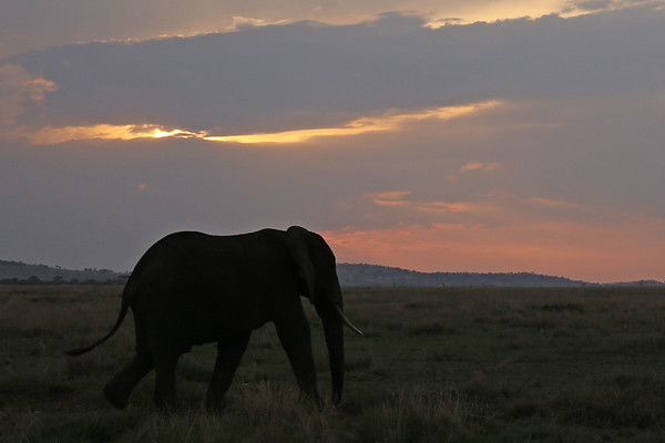 Serengeti National Park II