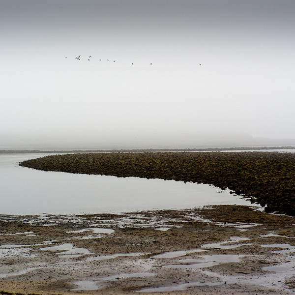 North shore Lindisfarne, Northumberland UK