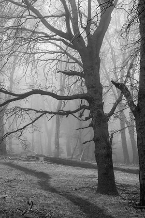 03-08 Boucher Hill in the Mist
