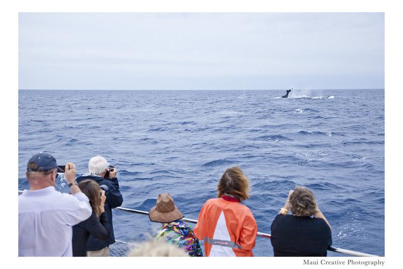 WhaleTales_2014_443.jpg