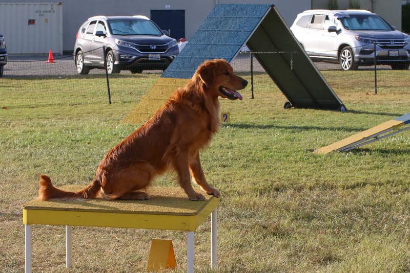 11-4-2018 Border Terrier-2483.jpg