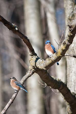 BISSELL Birds