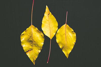 Plants & Leaves