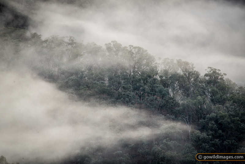 Morning mist rolls through the valleys of Snowy River NP