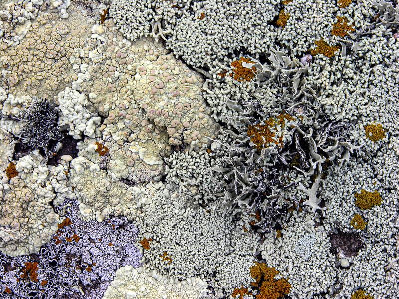 DSCN1940 Salt Point Lichens tNEF ala +++++.jpg