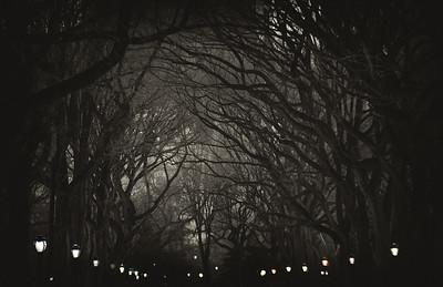 Central Park Canopy