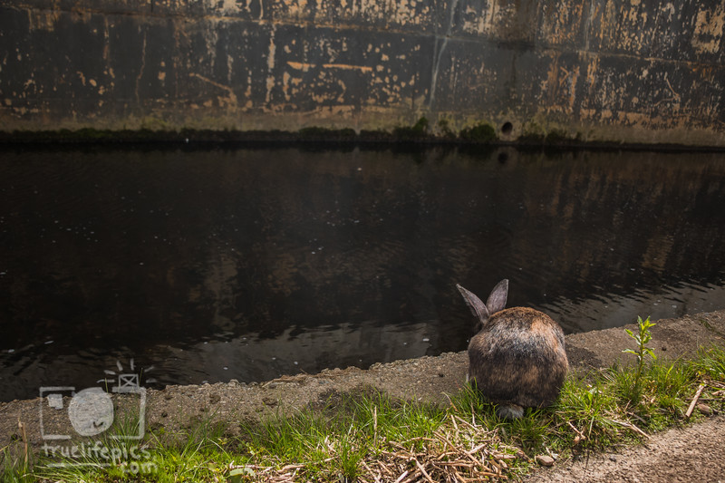 Mouse by the WorcShop Canal May 4, 2017 (15).jpg