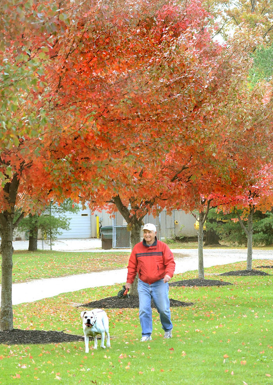 . Bob Sack of Waterford, walks his dog Patch under the colorfull trees at Waterford Oaks County Park.    Tuesday, October 22, 2013.  The Oakland Press/TIM THOMPSON