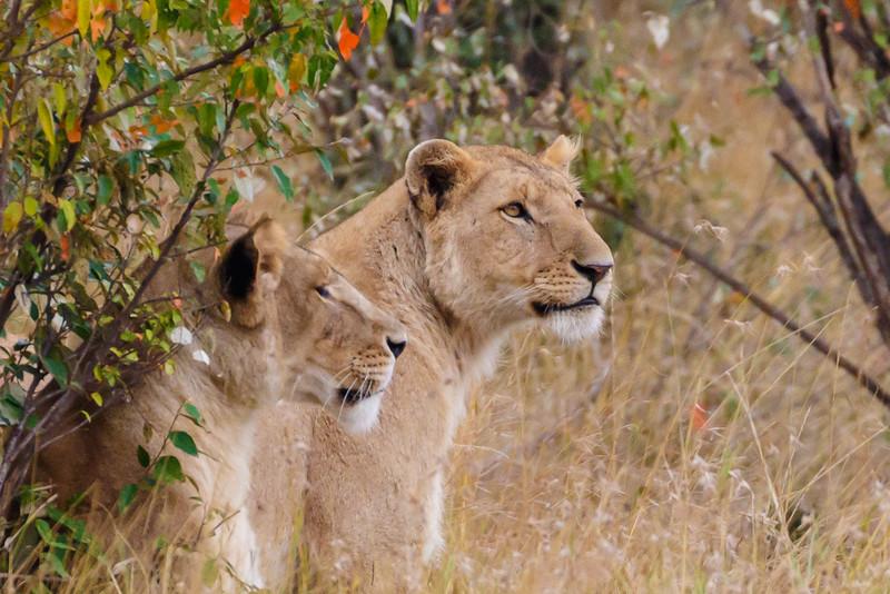 Kenya 2015-04851.jpg