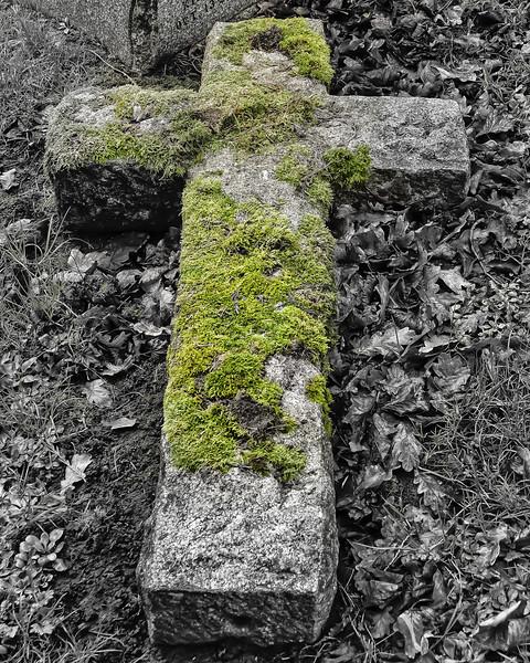 Moss on a Cross
