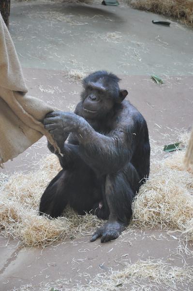 20130609 Antwerpen Zoo