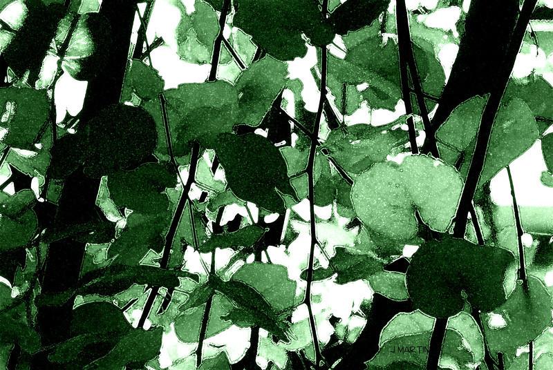 foliage 12-1-2008.jpg
