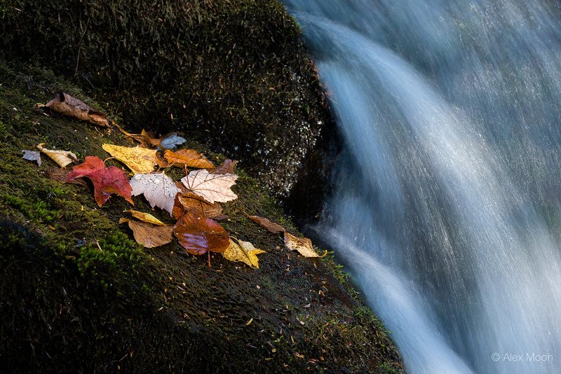 Leaves, Moss and Water