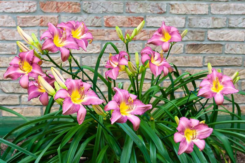 20190722 Daylilies-6541.jpg