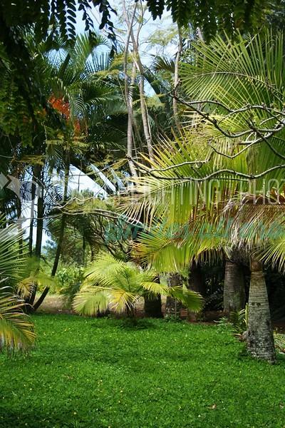 Tropical-Garden_batch_batch.jpg