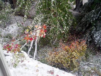 October 2011 Snowstorm