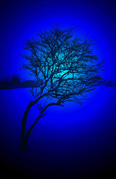 Blue snow tree curved - Copy.jpg
