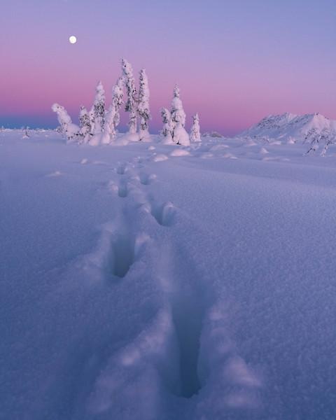 Moose Tracks & Ice Trees-2.jpg