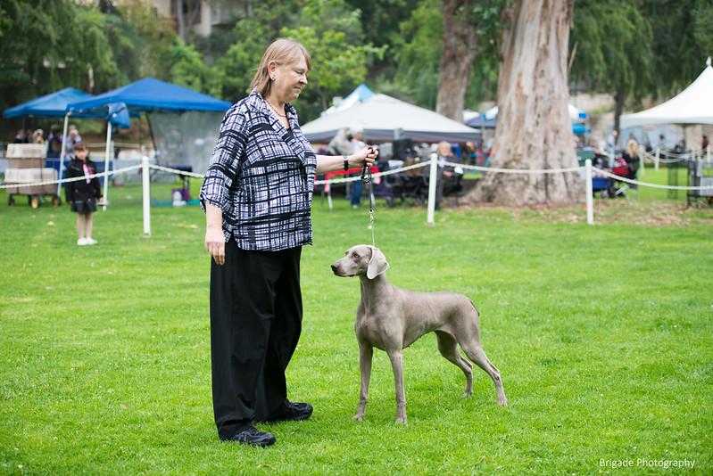 2019 Pasadena Kennel Club-8156.jpg