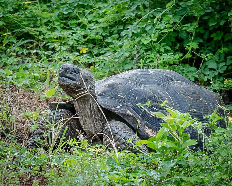 Galapagos-4225-2.jpg