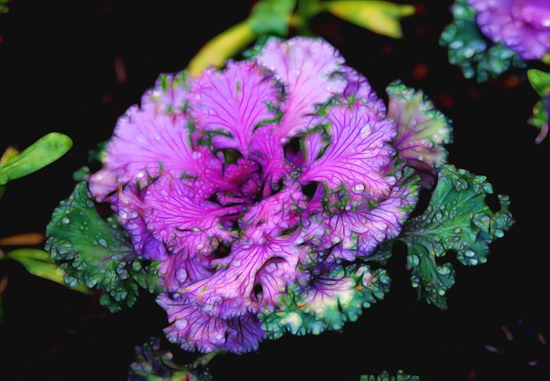 T-Cabbage 1.jpg