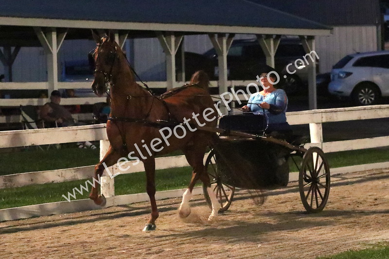 Class 20: American Saddlebred Country Pleasure Driving