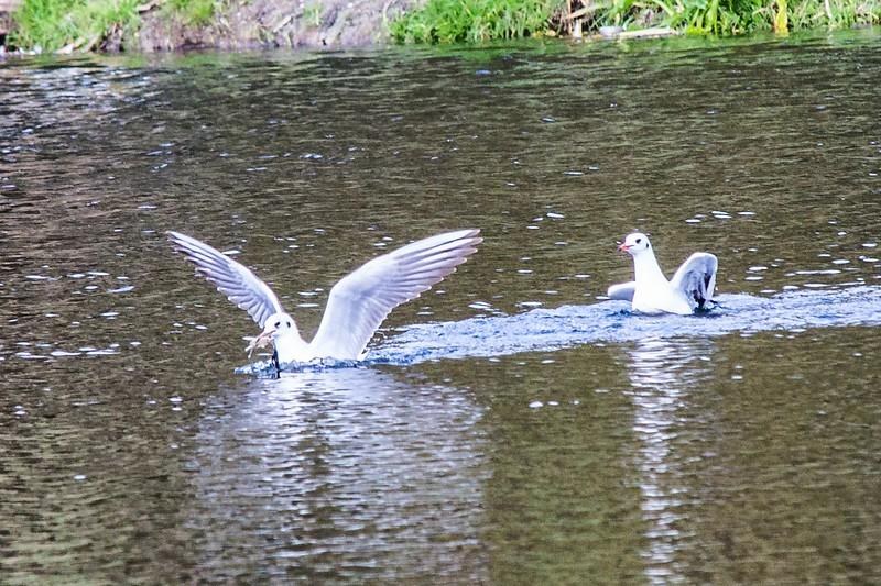 Lliswerry Pond & Park -25.jpg