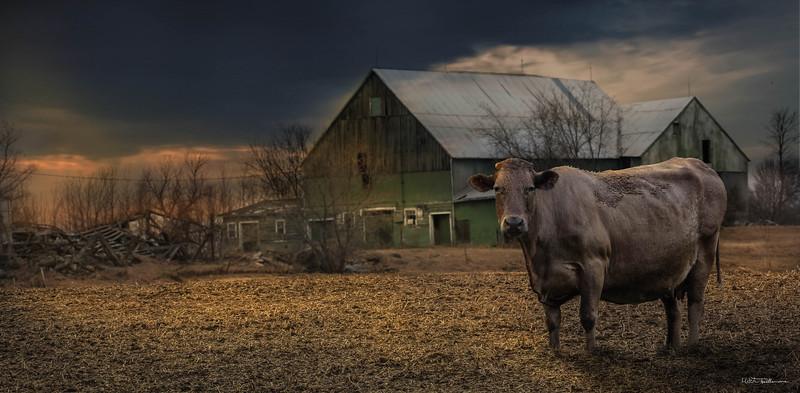 cow-barn.jpg