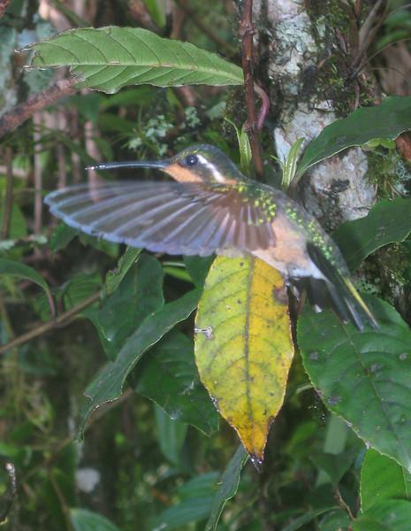 Costa Rica 08(2) 028a.jpg