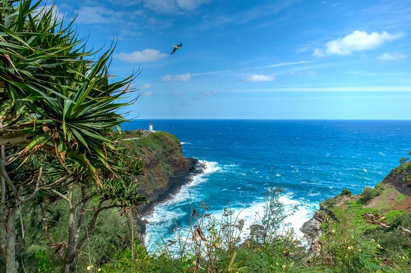 Kauai-40310.jpg